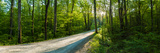 Dirt Road Passing Through a Forest, Great Smoky Mountains National Park, Blount County, Tennesse... Photographic Print by  Panoramic Images
