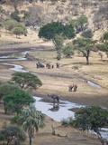 African Elephants (Loxodonta Africana) at a River, Tarangire River, Tarangire National Park, Tan... Lámina fotográfica