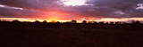 Sunset over the Savannah Plains, Kruger National Park, South Africa Photographic Print by  Panoramic Images