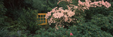 Flowering Dogwood with a Garden Gate, Anacortes, Fidalgo Island, Skagit County, Washington State... Photographic Print by  Panoramic Images