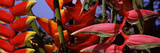 Close-Up of Heliconia Flowers, Hawaii, USA Photographic Print by  Panoramic Images