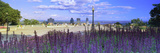 Blooming Flowers with City Skyline in the Background, Kondiaronk Belvedere, Mt Royal, Montreal, ... Photographic Print by  Panoramic Images