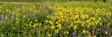 Wildflowers in a Field, Crested Butte, Gunnison County, Colorado, USA Photographic Print by  Panoramic Images
