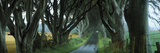 Road at the Dark Hedges, Armoy, County Antrim, Northern Ireland Photographic Print by  Panoramic Images
