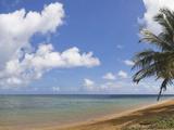 Palm Tree on the Beach, Kauai, Hawaii, USA Photographic Print by  Panoramic Images