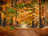 Horse Running across Road in Fall Colors Reproduction photographique par  Panoramic Images