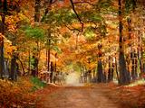 Panoramic Images - Horse Running across Road in Fall Colors Fotografická reprodukce