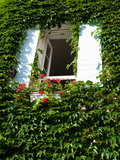 Window of a Building Surrounded by Ivy, Lourmarin, Vaucluse, Provence-Alpes-Cote D'Azur, France Photographic Print