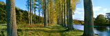 Poplar Treelined at the Riverside, River Tweed, Maxton, Newtown St. Boswells, Scotland Photographic Print by  Panoramic Images