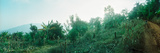 Vegetation in a Forest, Chiang Mai Province, Thailand Photographic Print by  Panoramic Images