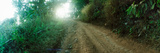 Dirt Road Through a Forest, Chiang Mai Province, Thailand Photographic Print by  Panoramic Images