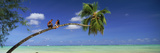 Couple on Trunk of a Palm Tree on the Beach, Aitutaki, Cook Islands Photographic Print by  Panoramic Images