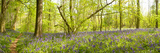 Trees in a Forest, Thursford Wood, Norfolk, England Photographic Print by  Panoramic Images