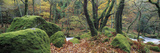 River Flowing Through a Forest, River Plym, Dartmoor, Devon, England Photographic Print by  Panoramic Images