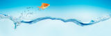 Goldfish Jumping Out of Water Fotoprint van Panoramic Images,
