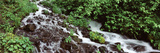 Creek in a Forest, Wahkeena Creek, Columbia Gorge National Scenic Area, Columbia River Gorge, Mu... Photographic Print by  Panoramic Images