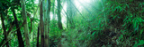 Bamboo Forest, Chiang Mai, Thailand Photographic Print by  Panoramic Images