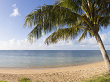 Palm Trees on the Beach, Anini Beach, Kauai, Hawaii, USA Photographic Print by  Panoramic Images