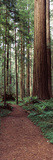 Trail Passing Through a Redwood Forest, Redwood National Park, California, USA Fotodruck von  Panoramic Images