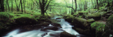 Waterfall in a Forest, Golitha Falls, River Fowey, Cornwall, England Photographic Print by  Panoramic Images