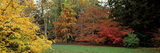 Autumn Trees in Westonbirt Arboretum, Gloucestershire, England Photographic Print by  Panoramic Images