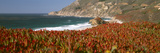 Flowers on the Coast, Big Sur, California, USA Photographic Print by  Panoramic Images