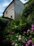 Chrysanthemums in Front of an Old House, Lacoste, Vaucluse, Provence-Alpes-Cote D'Azur, France Photographic Print