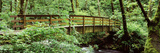 Bridge in a Forest, Bridal Veil Falls Oregon, Columbia Gorge National Scenic Area, Columbia Rive... Photographic Print by  Panoramic Images