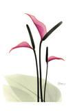 Flamingo Plant Prints by Albert Koetsier