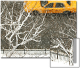 Yellow Cab on Park Avenue in a Snowstorm Posters by Bo Zaunders