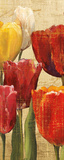 Tulip Fantasy on Cream III Posters by Marilyn Hageman