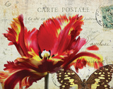 Carte Postale Tulip I Art by Amy Melious