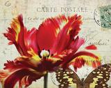 Carte Postale Tulip I アート : エイミー・メリオウス