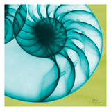 Neon Nautilus Prints by Albert Koetsier