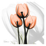 Orange tulips Print by Albert Koetsier