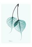 Bodhi Tree Teal Poster von Albert Koetsier