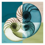 Blue Green Shell 2 Print by Albert Koetsier