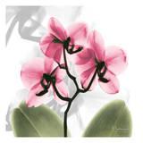 BW Orchid Orange Prints by Albert Koetsier