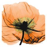 Poppy Orange Posters par Albert Koetsier