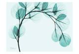 Teal Eucalyptus Posters af Albert Koetsier