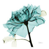 Teal Rose 2 Poster von Albert Koetsier