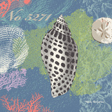 Shells on Blue Prints by Wendy MacFarlane