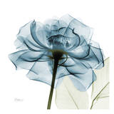 Blue Rose Print by Albert Koetsier