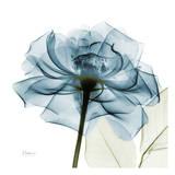 Rosa azul Lámina por Albert Koetsier