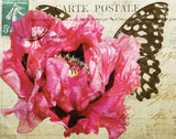Carte Postale Poppy Prints by Amy Melious