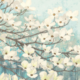 Dogwood Blossoms II Prints by James Wiens