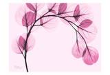 Pink Eucalyptus Plakater af Albert Koetsier