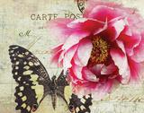 Carte Postale Peony Print by Amy Melious
