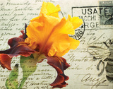Carte Postale Iris Prints by Amy Melious
