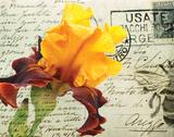 Carte Postale Iris 高画質プリント : エイミー・メリオウス